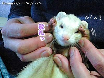 はっぴーらいふ with ferrets-い…生きています。④