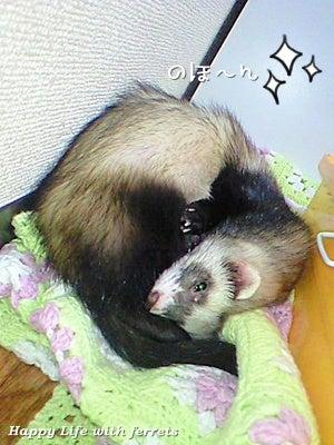 はっぴーらいふ with ferrets-い…生きています。⑥