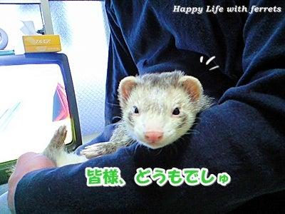 はっぴーらいふ with ferrets-い…生きています。①