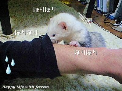 はっぴーらいふ with ferrets-い…生きています。⑧
