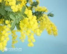 ロザブロ  ウェディングとギフトのお花とワタシ-壁紙003