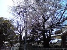 ただいま休止中~どさまわり営業日記~-sakura