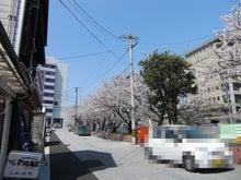 """山岡キャスバルの""""偽オフィシャルブログ""""「サイド4の侵攻」-高知市堀川の桜 2"""