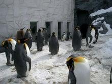 ミッキーのblog-ペンギン