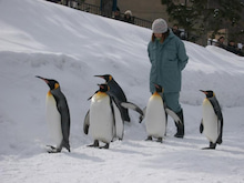 ミッキーのblog-ペンギン散歩