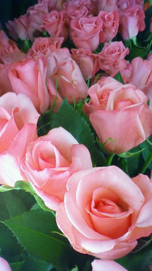 「Natural Style drop」のstaff blog-200903291539000.jpg