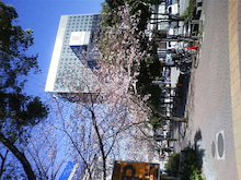 小林愛 ヨガインストラクター ブログ-TS3D0002.JPG