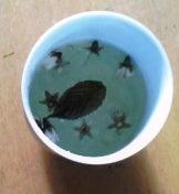 老人とブログの海-桜花茶