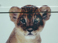 女将のブログ-ライオン