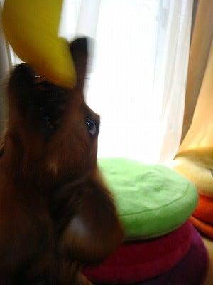 旅犬Laniのほほん風船記-夢ゆりさんから