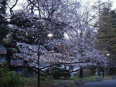 旅犬Laniのほほん風船記-駒沢公園