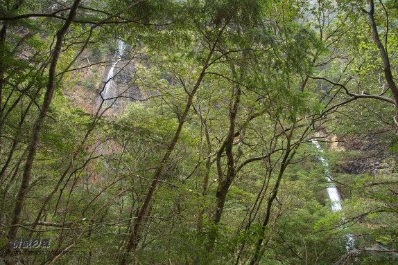 清流の森 ~九州の滝と風景~-すだれ&さぎり