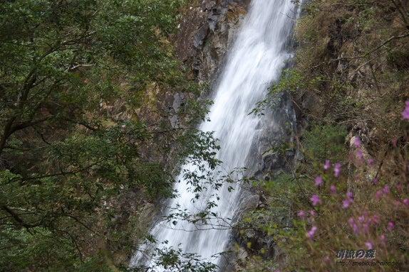 清流の森 ~九州の滝と風景~-さぎりの滝