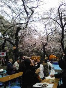 Nikoru Zone Japan - 二コル ゾーン 日本-Sakura