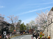 鳴瀬シュウヘイ オフィシャルブログ 「Shuhei Naruse blog」-sakura