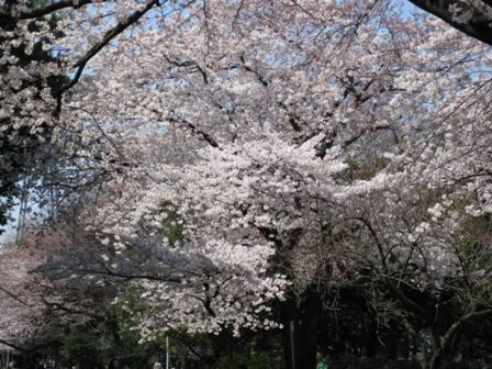 TheoBlog     -テオブログ--SAKURA
