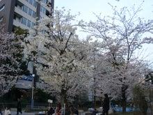 司法書士 堀 明子のここがミソ(「ココミソブログ」)!!-中央区立桜川公園