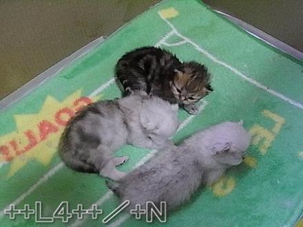 ++ L4 ++  ~ チンチラ猫レオンのヤンチャな毎日 ~-20090405D