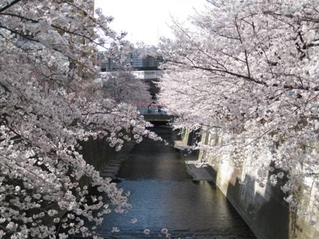 TheoBlog     -テオブログ--目黒川5