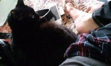 スス♀+ぶー♂ログ ~黒猫とアメショMIX+その下僕~ -090404_1337~010001.jpg