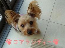 ☆RAN♪らん♪ランディー☆