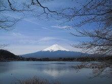 【競馬よ今宵も有難う】馬、牧場、富士山の写真と生活を懸けた競馬予想!-富士山と桜