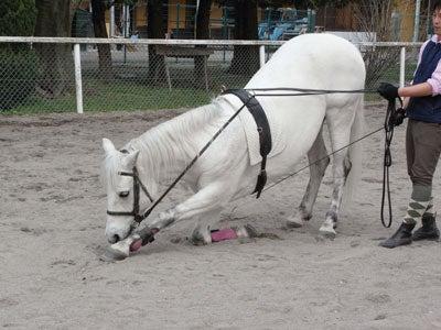 【たんぽぽの惑星】-馬事公苑