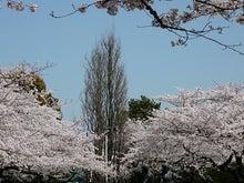 うさちゃんの徒然日記-千鳥が淵公園