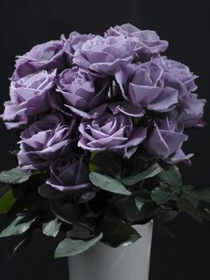 オカヤマのフィールドノート-青いバラ