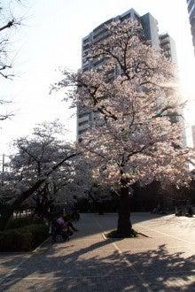 カルマンギアのある生活-グリーンコートの桜3
