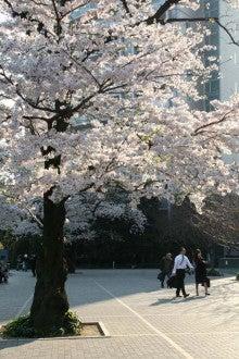 カルマンギアのある生活-グリーンコートの桜2
