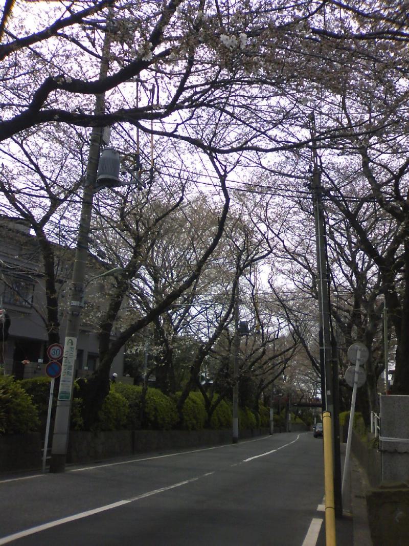 宅ひとりごはん-3/29 さくら坂