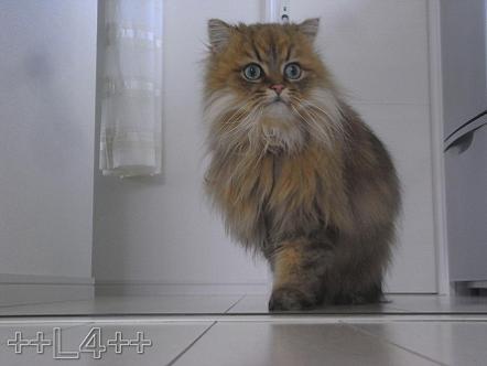 ++ L4 ++  ~ チンチラ猫レオンのヤンチャな毎日 ~-20090406