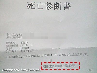 重度細菌性化膿性肺炎②