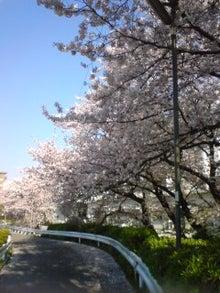 我が家のちびっこギャング-近所の桜