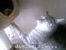 スス♀+ぶー♂ログ ~黒猫とアメショMIX+その下僕~ -CA3C0114.jpg