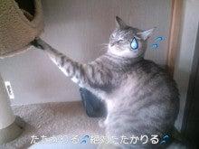 スス♀+ぶー♂ログ ~黒猫とアメショMIX+その下僕~ -CA3C0113.jpg
