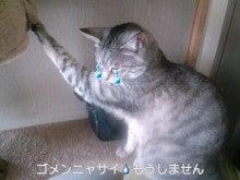 スス♀+ぶー♂ログ ~黒猫とアメショMIX+その下僕~ -CA3C0111.jpg
