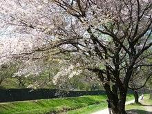 うさちゃんの徒然日記-野川公園1