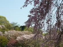 うさちゃんの徒然日記-野川公園5