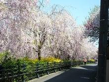 うさちゃんの徒然日記-野川公園6