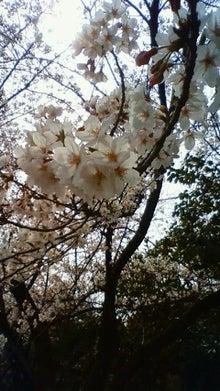雑音にしか聴こえない音楽~命を削って聴け!~デス、グラインド、ノイズ、スラッシュ~-桜