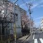 もうひとつ桜