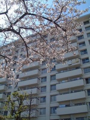 【北千住】 「まるごとマイタウン東京」ブログ-千住東町団地