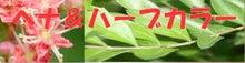 美髪室ゆい Kaz のブログ