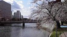 Cross Life Scripting-広島市内の桜
