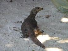 気まぐれな世界-A Huge Lizard
