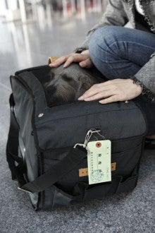 N-1tour旅行記-愛犬と行くグアム旅行(準備・出発編)@