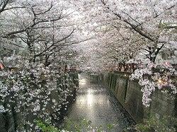 ☆ブログ版☆ 「東京ホームレス」 村上知奈美-2009/4/7目黒川