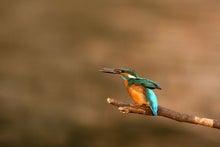 T/Hの野鳥写真 -カワセミ
